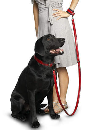 Hands-Free Dog Leash Set