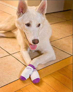 Power Paws are fashionable, and provide traction for ALL dogs on hardwood, tile, and linoleum