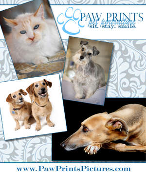 LA's best pet photography, Paw Prints Pet Portraiture