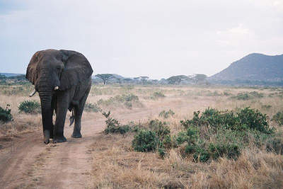 With Kensignton Tours you can go on an African Safari or stay closer to home