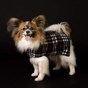 The Original Goose Down Doggie Coat