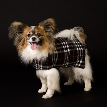 Original Goose Down Doggie Coat