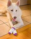 Traction/Fashion socks for dogs Power Paws by Woodrow Wear