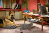Cats and Dogs Review - Can Kitty Galore get her Revenge?