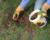 Lawn Renewal and Renovation Tips - Shared by Gardening Expert Melinda Myers
